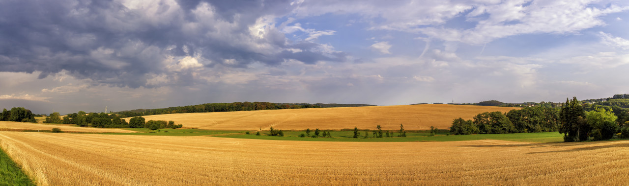 Rural landscape with a harvested wheat field in Germany near Velbert Langenberg, Neviges in North Rhine Westphalia