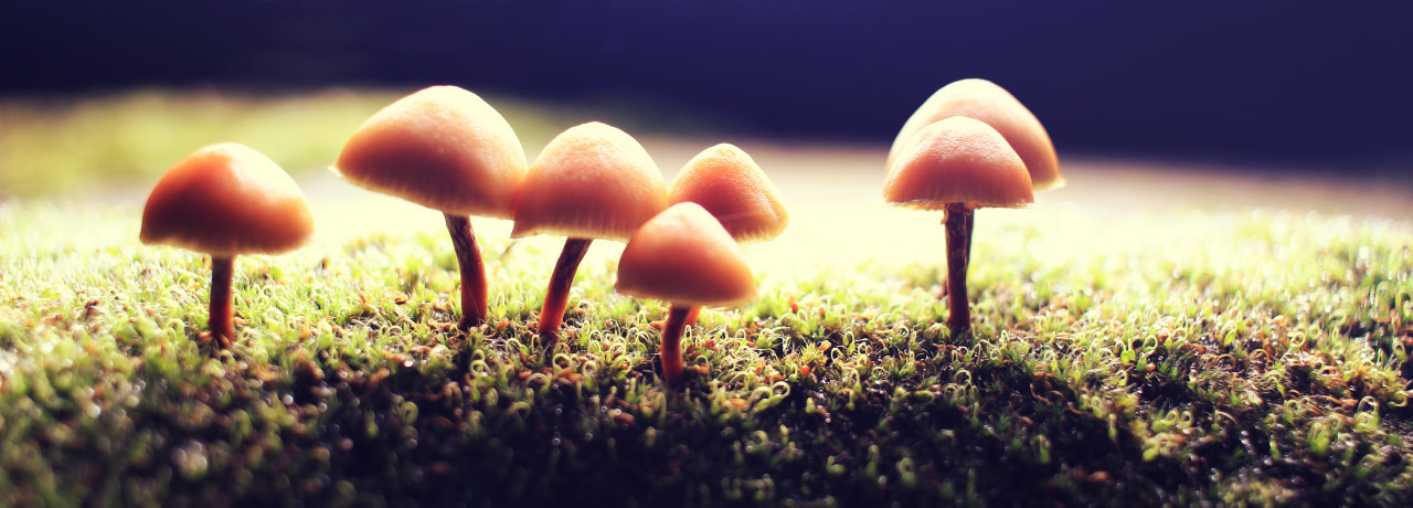 mushroom in the forest at night