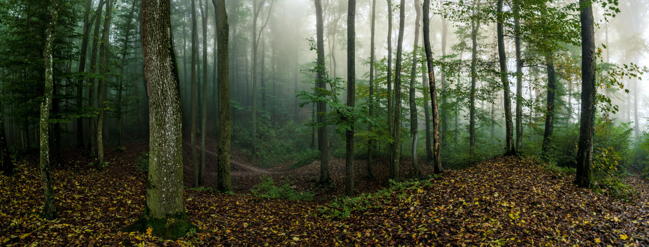 Forest in the morning breathed in mist