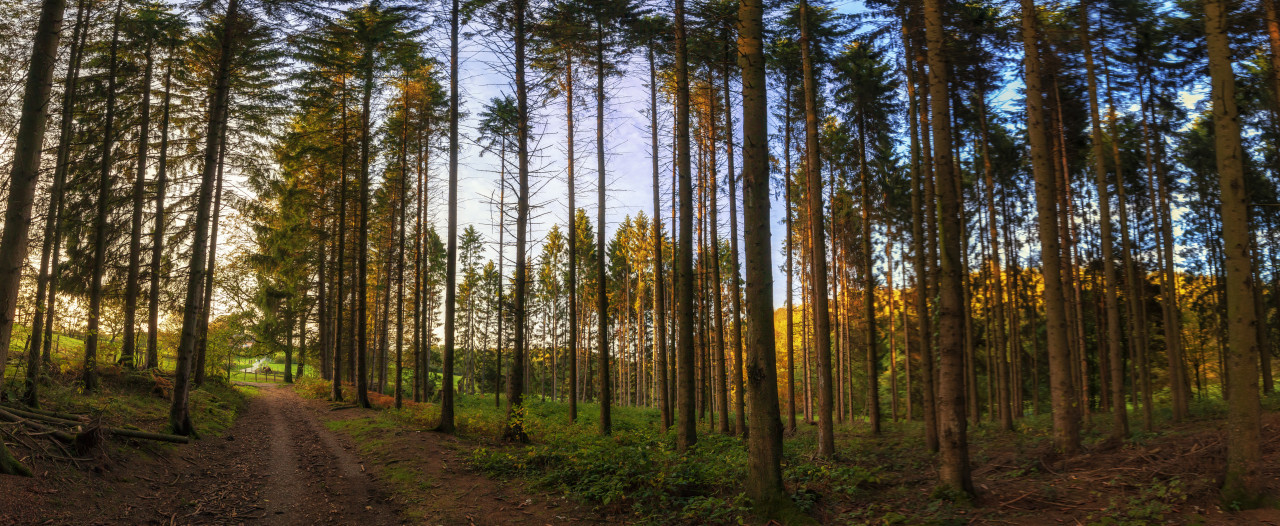 German Forest Panorama