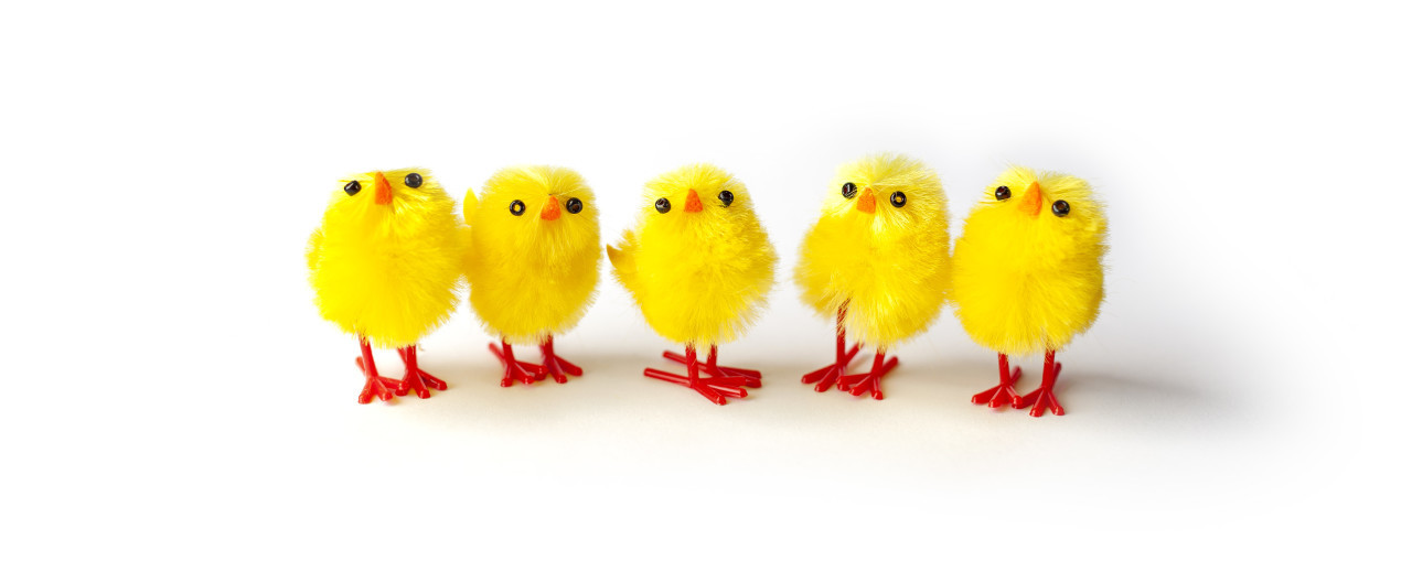 Adorable Easter chicks isolated on white background