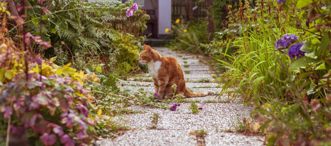 cute cat on a garden way