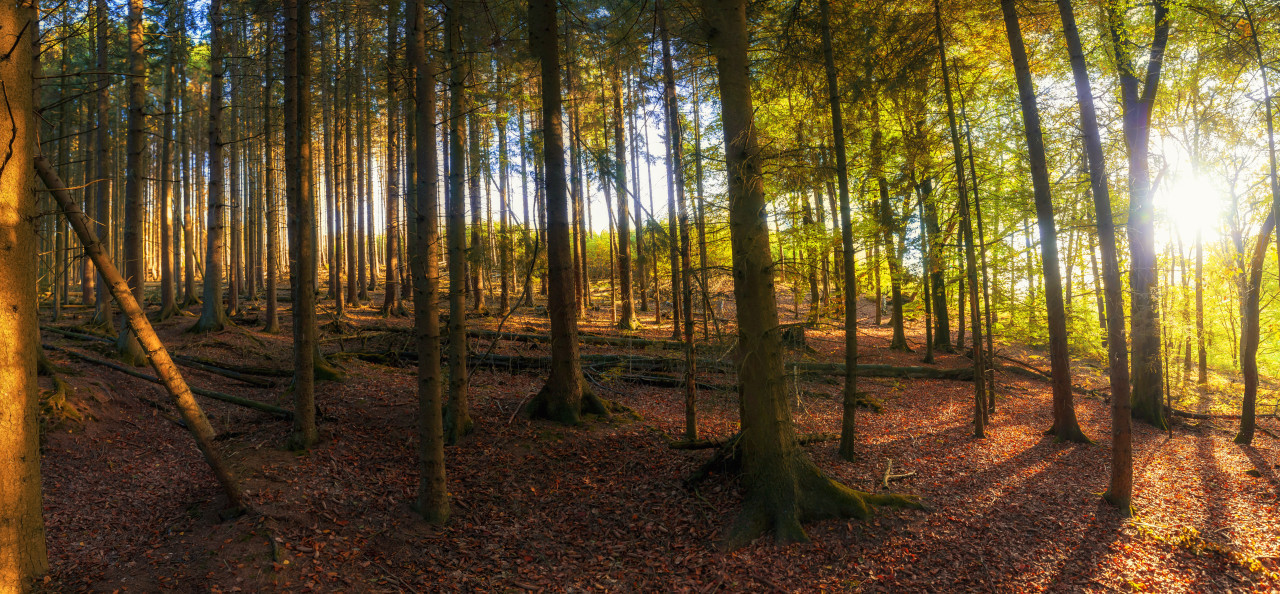 german autumn forest landscape marscheider bachtal in nrw - Panorama