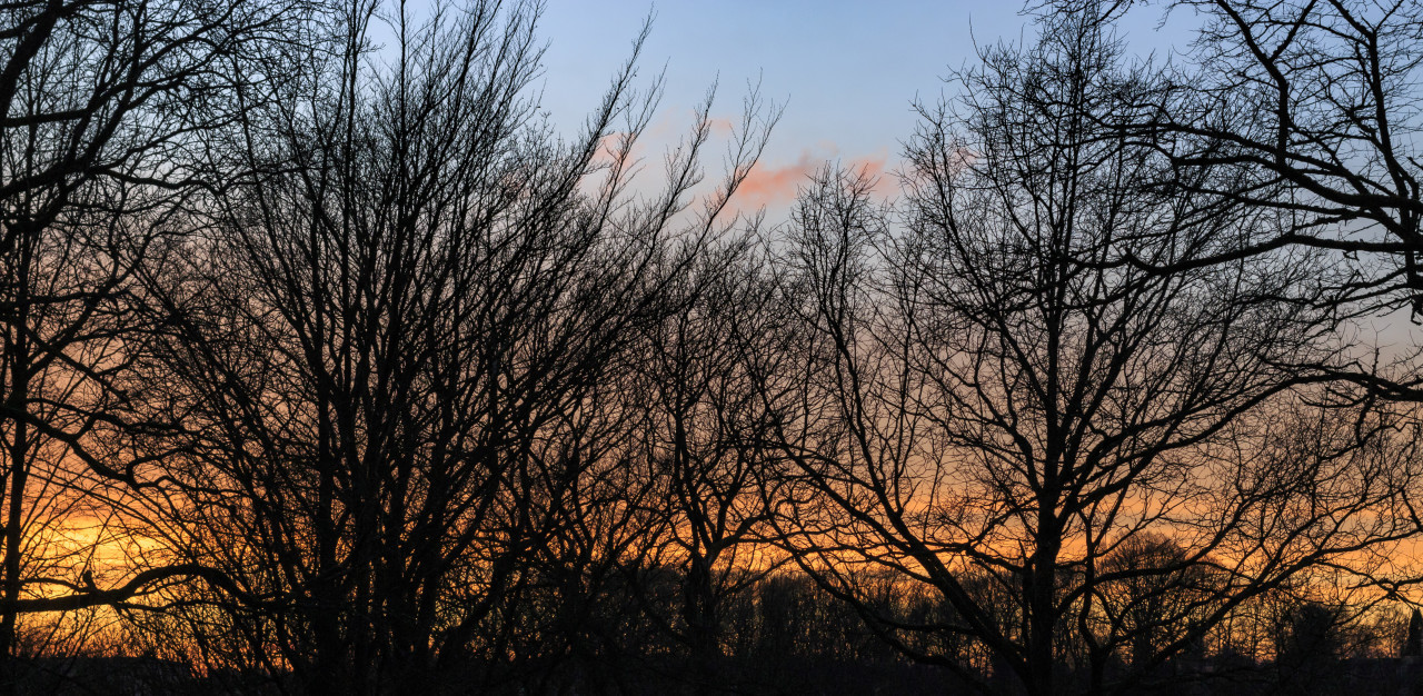 Magical sunrise with tree silhouettes
