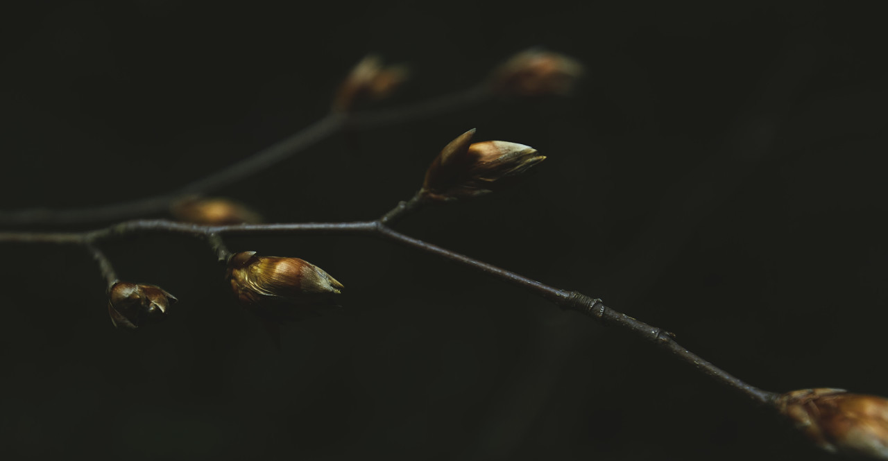 dead branch with buds