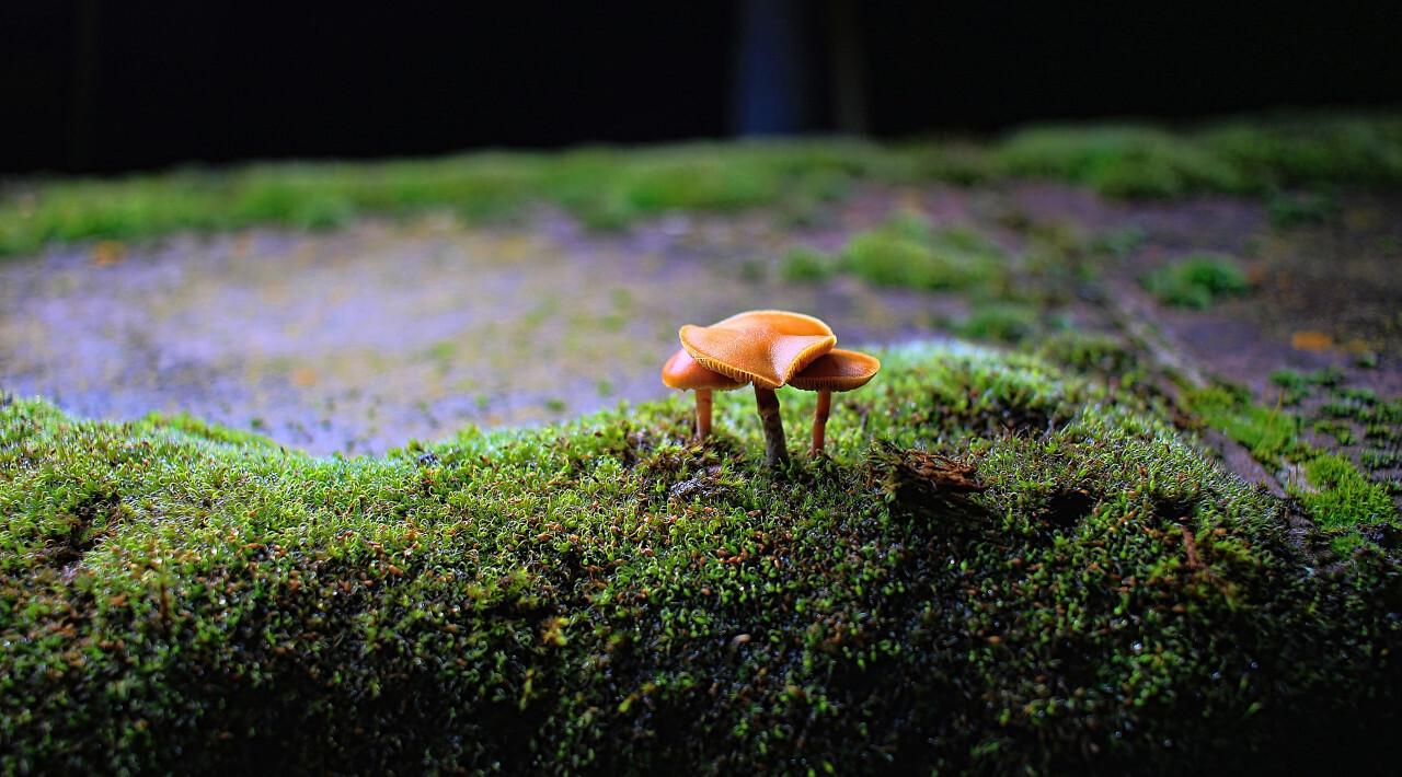 mushrooms on a wall