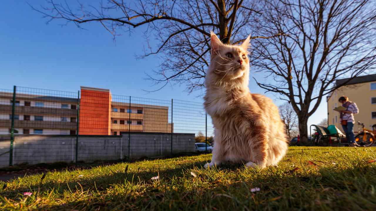 Old street cat sits on a meadow in a park in the middle of the city in early spring