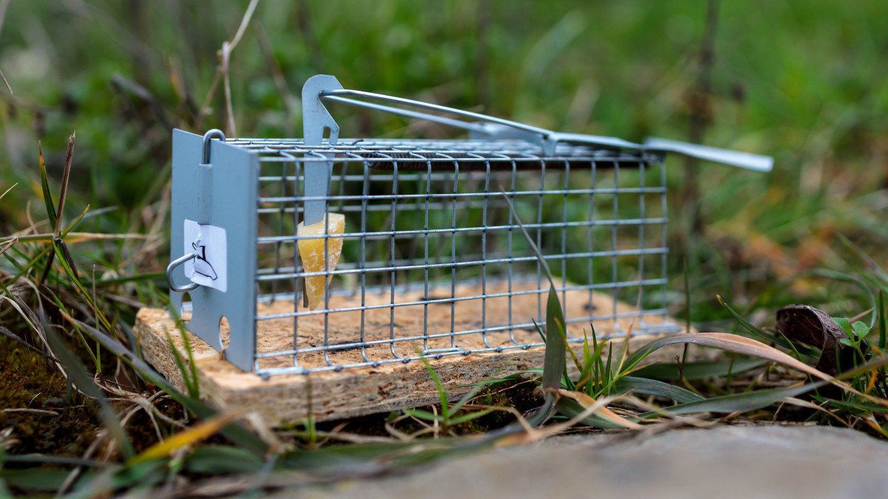 mouse trap to catch them alive in the garden