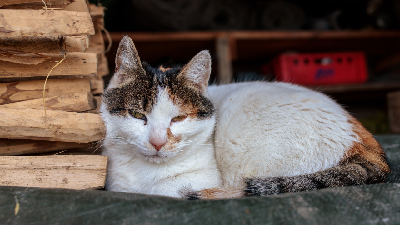 A cat living on the farm