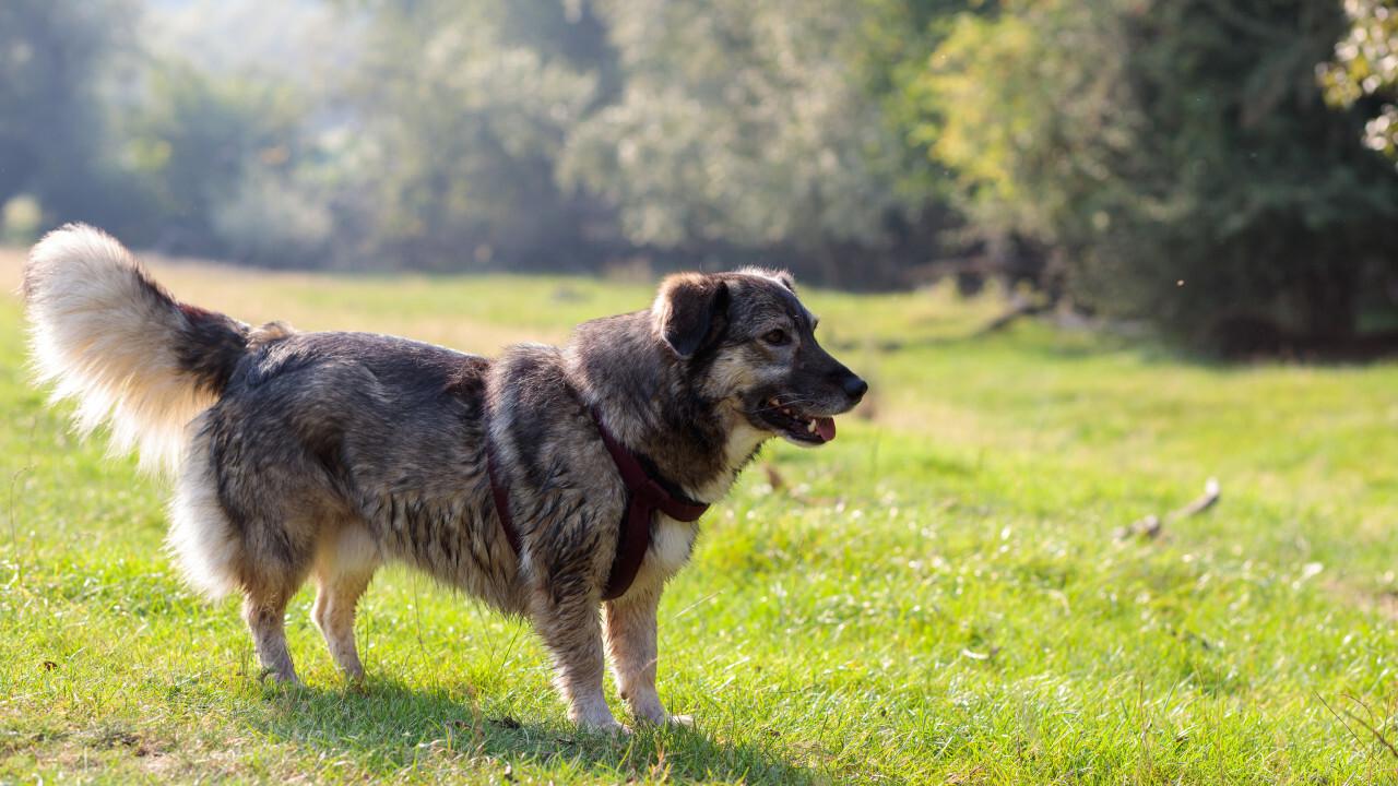 Cute dog on a meadow