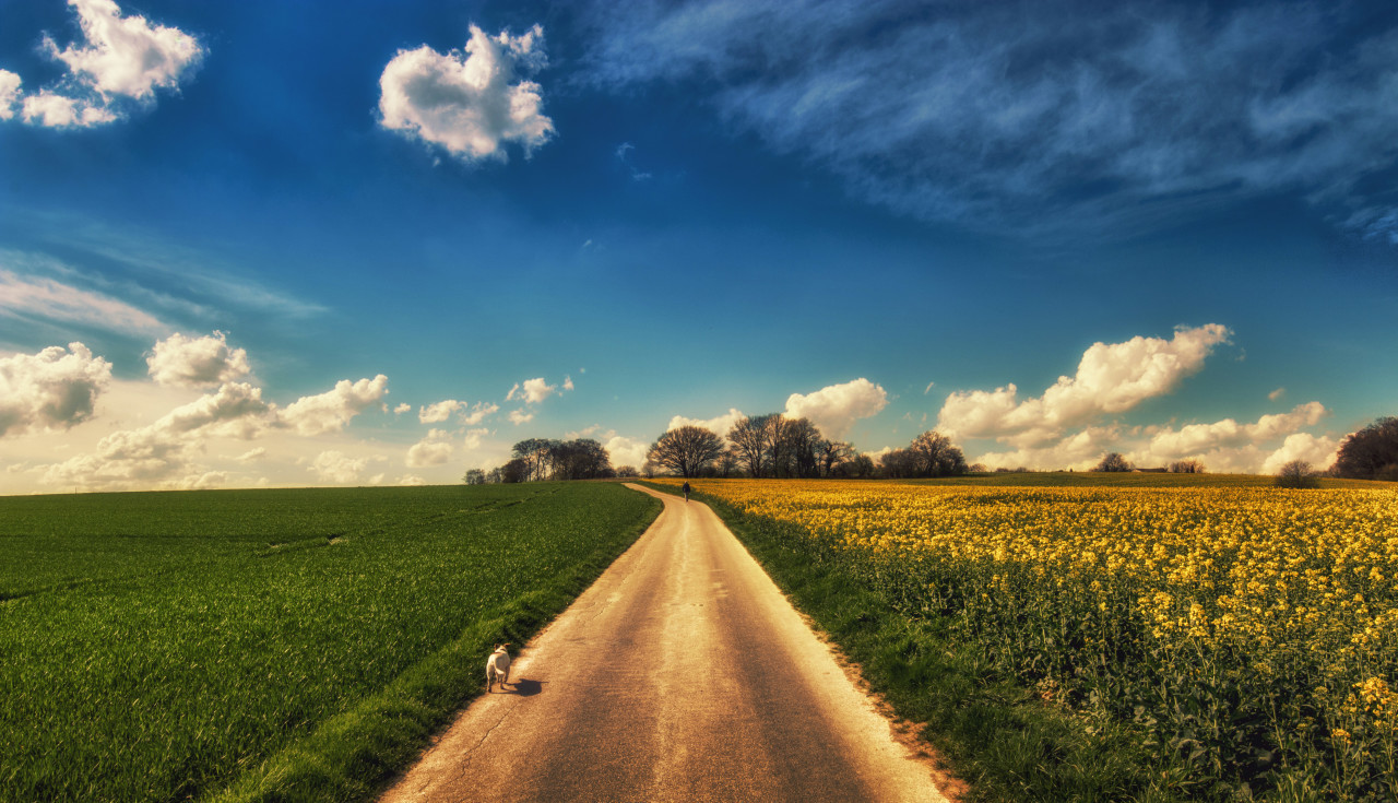 Country Road in Wülfrath with a Rape field on the right