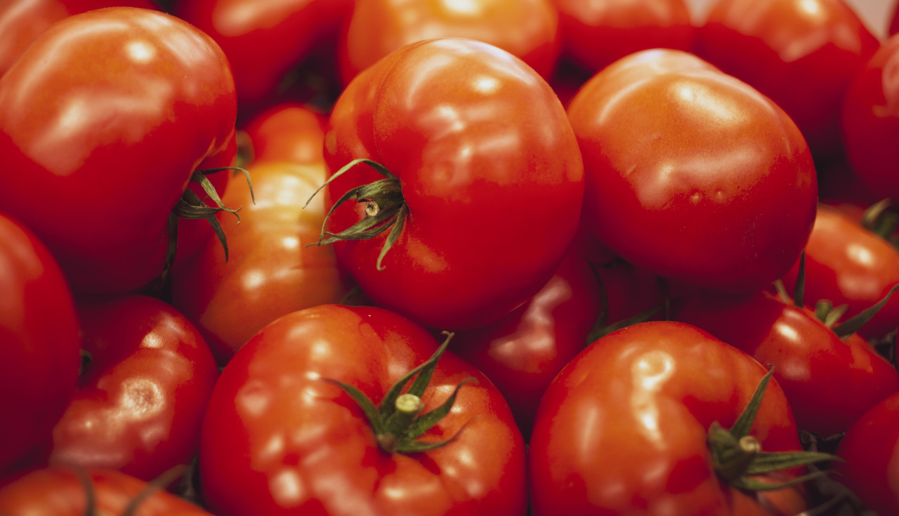 Group of fresh red tomatoes