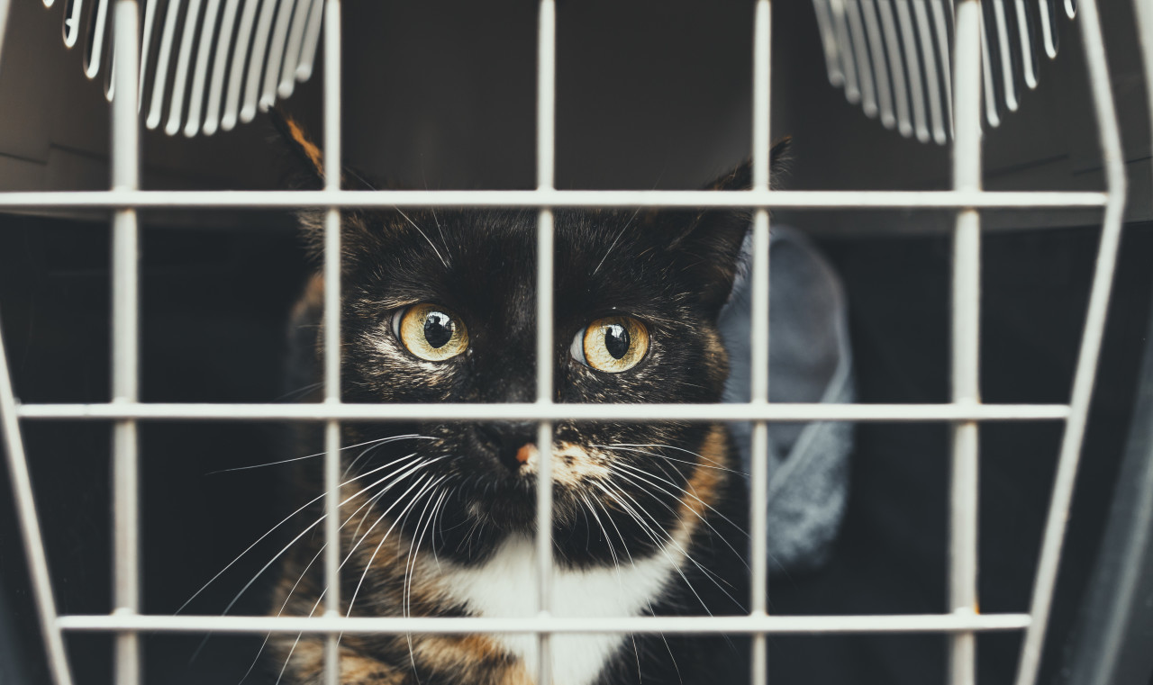 Poor kitten in a cage looking out