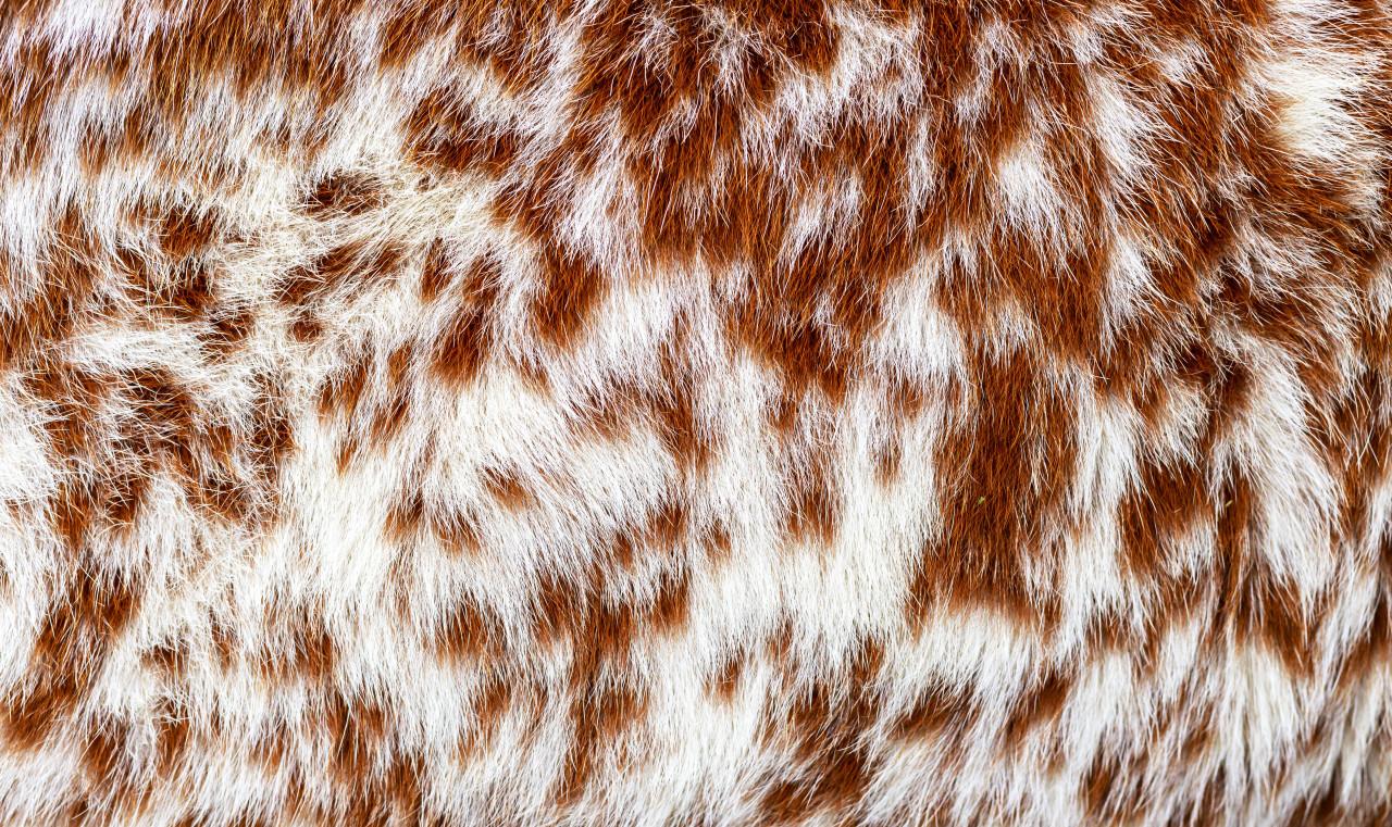 Cowhide Texture
