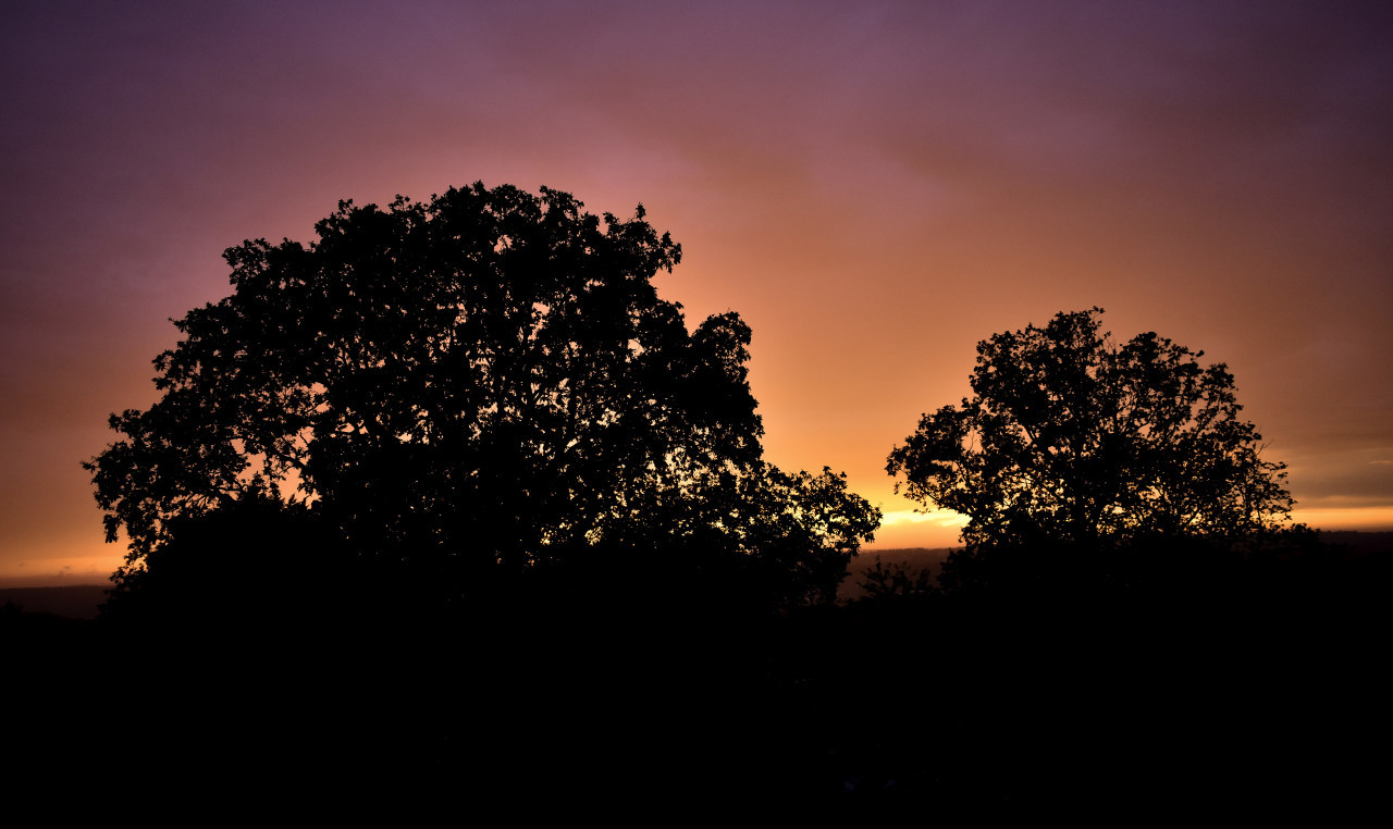 violette sunset behind trees