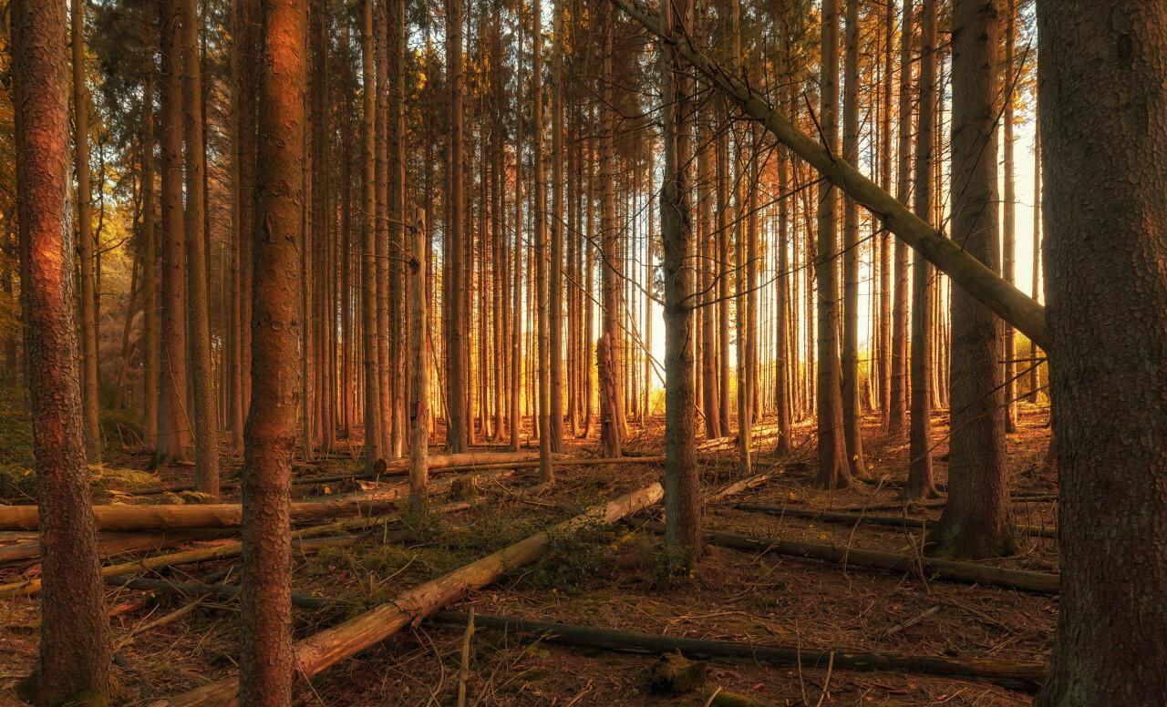 german autumn forest landscape marscheider bachtal in nrw