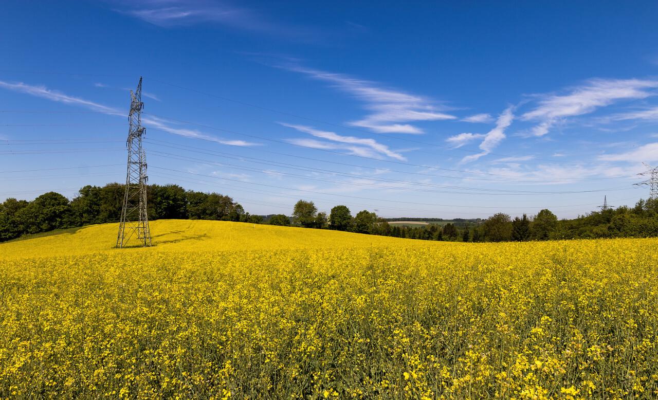 yellow rape fields landscape