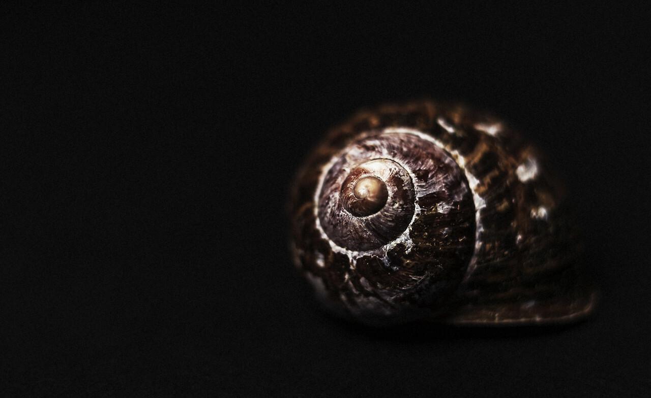 snail shell dark