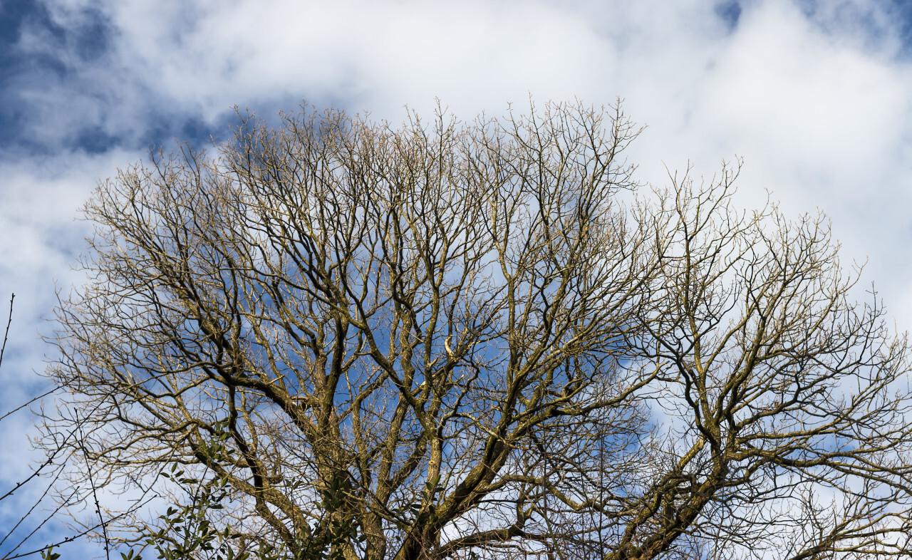 winter end treetop