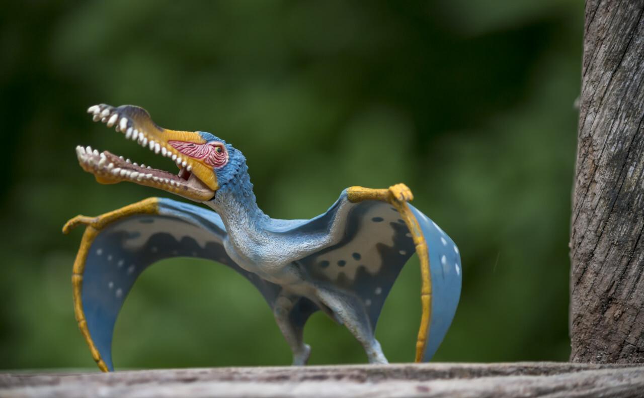 anhanguera dinosaur toy