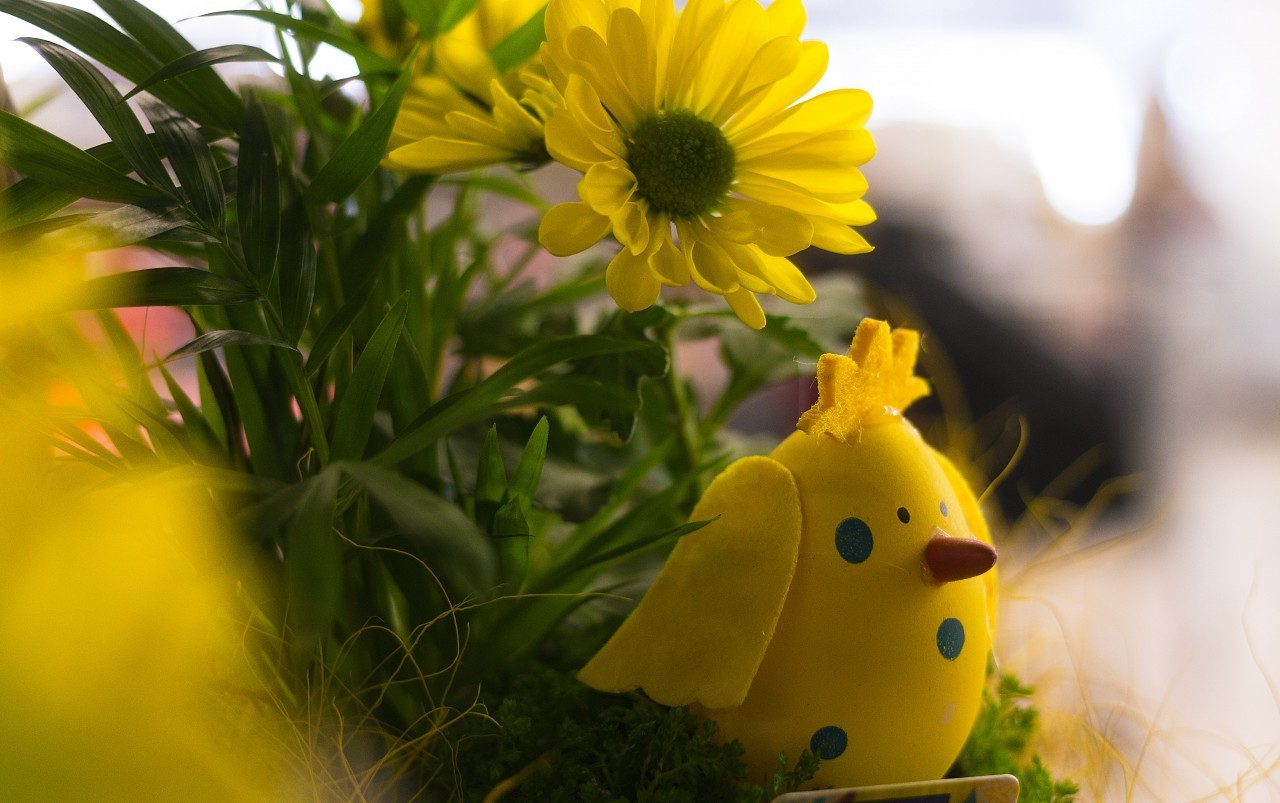 spring easter decoration chicks and flowers