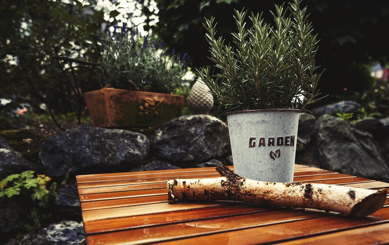 garden herbs on a table after rain