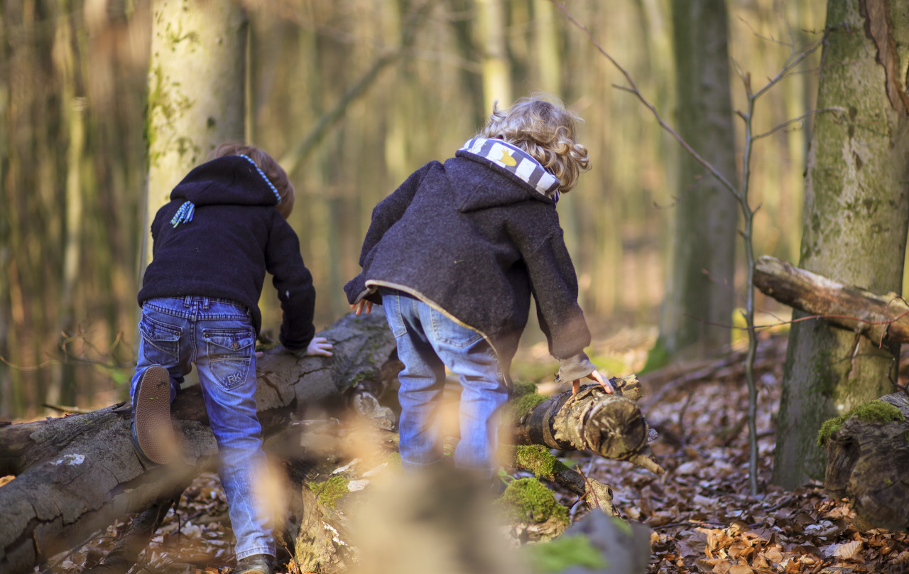 Little brothers hiking in a forest