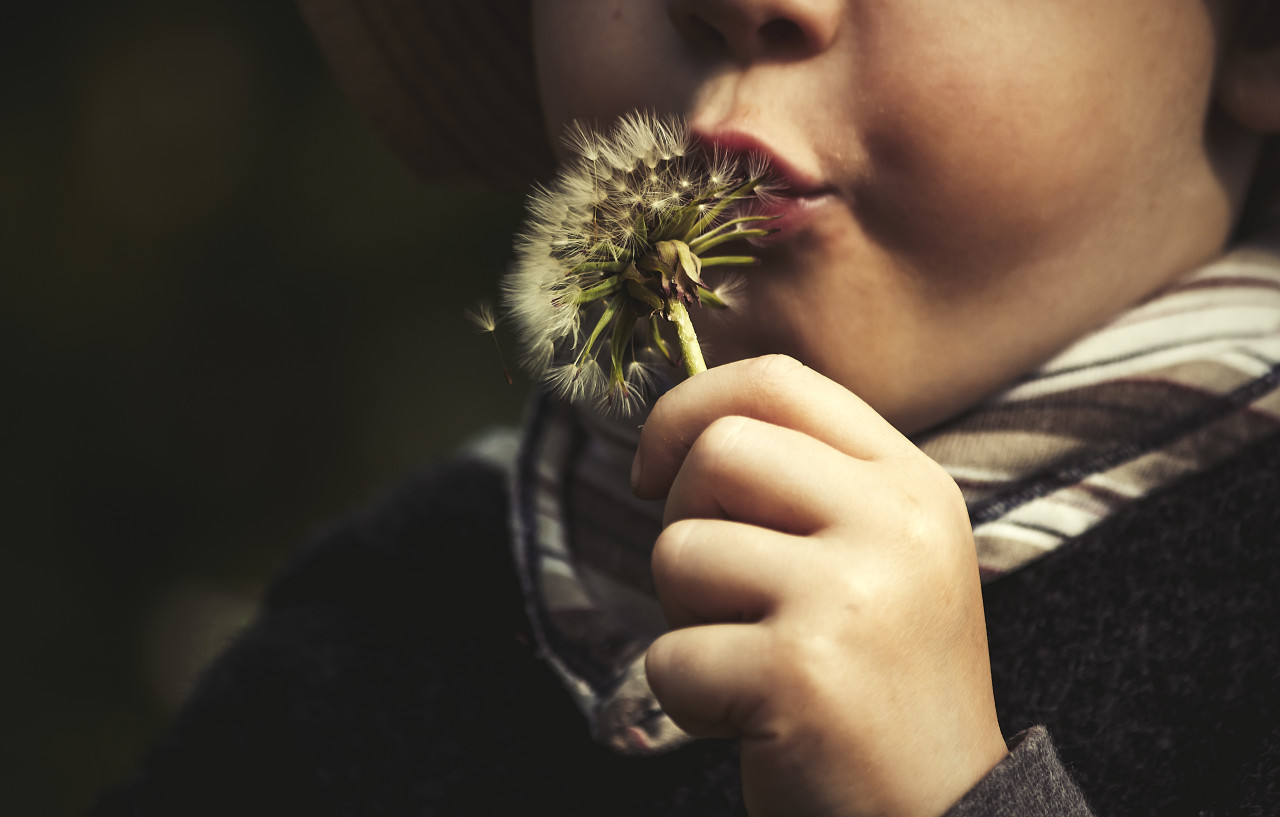 child with blowball