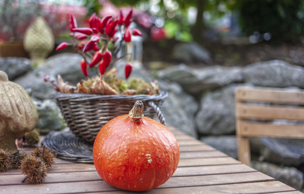 Thanksgiving garden decorated with a pumpkin and a chilly plant in autumn