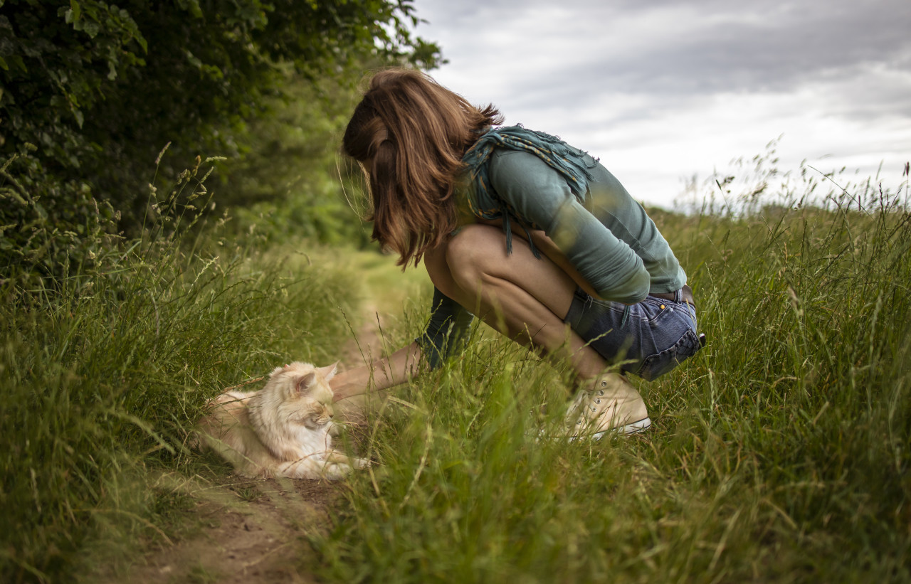 maine coon cat lies on a dirt road in the grass and is petted by a young woman