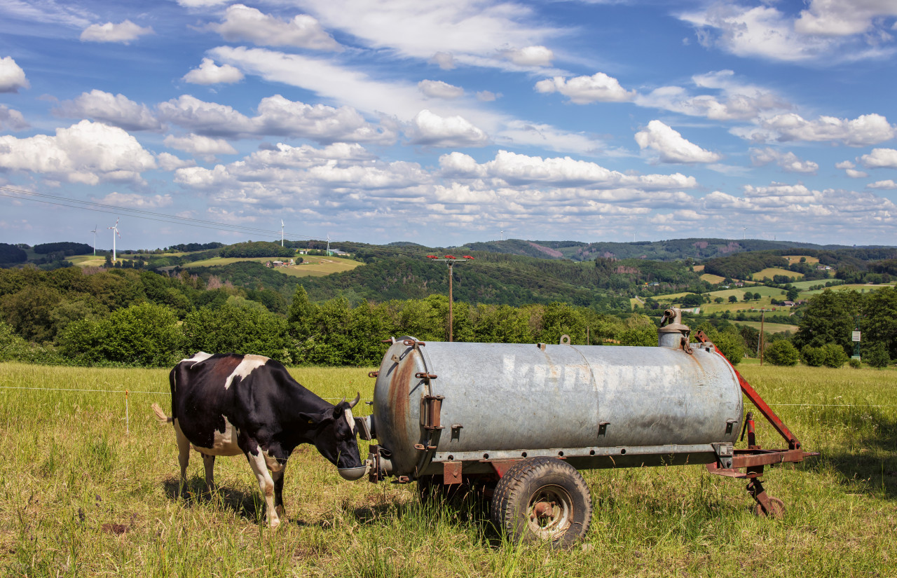 German rural landscape in Velbert Langenberg with hills in the background and a drinking cow in the foreground in summer
