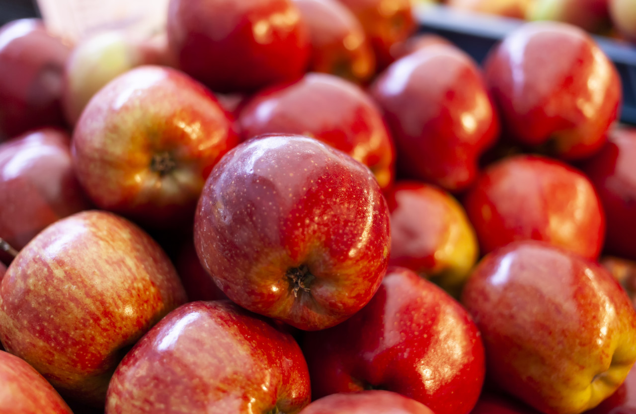 fresh  red apples in the market