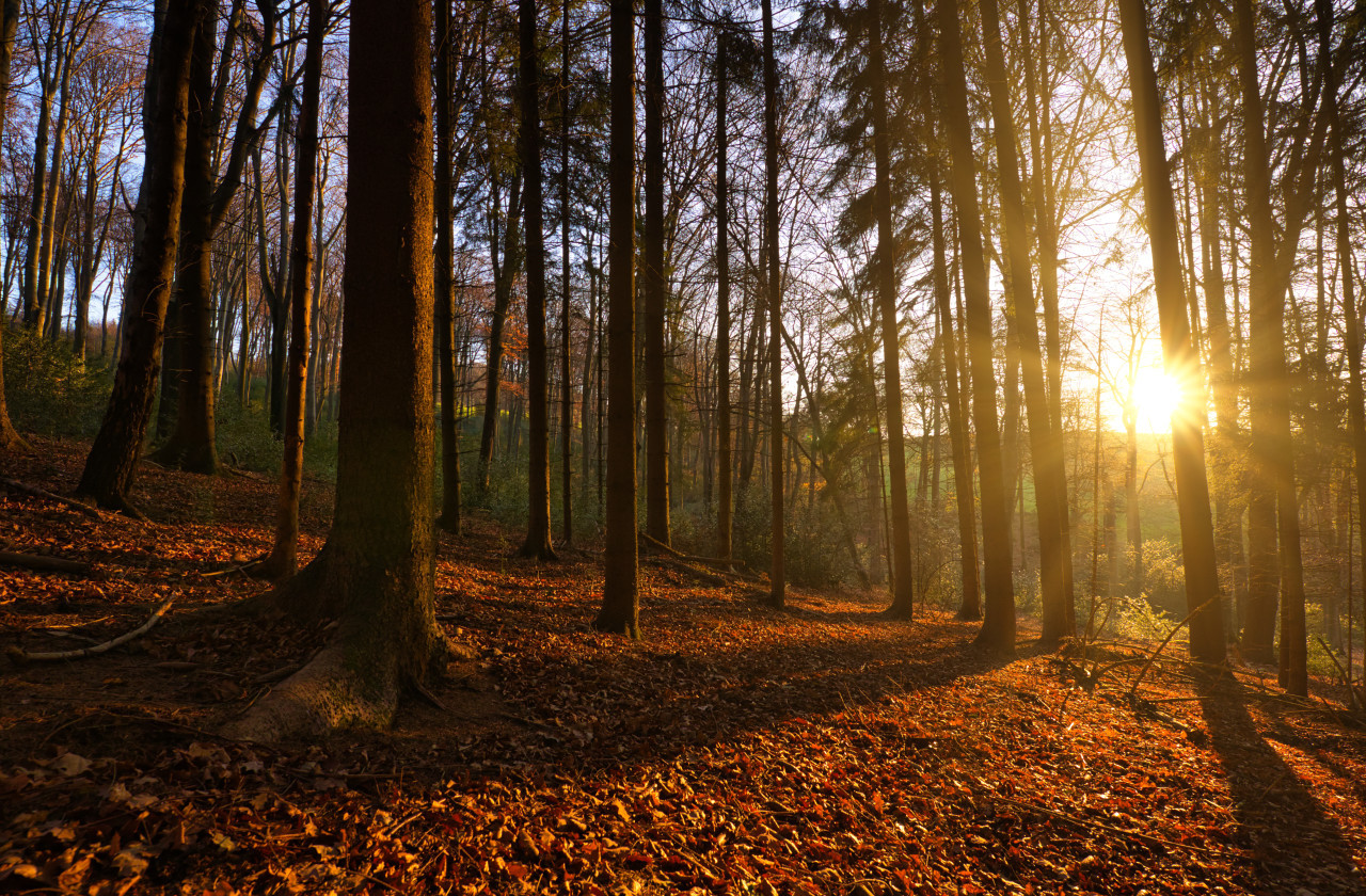 autumn panorama of a sunny forest