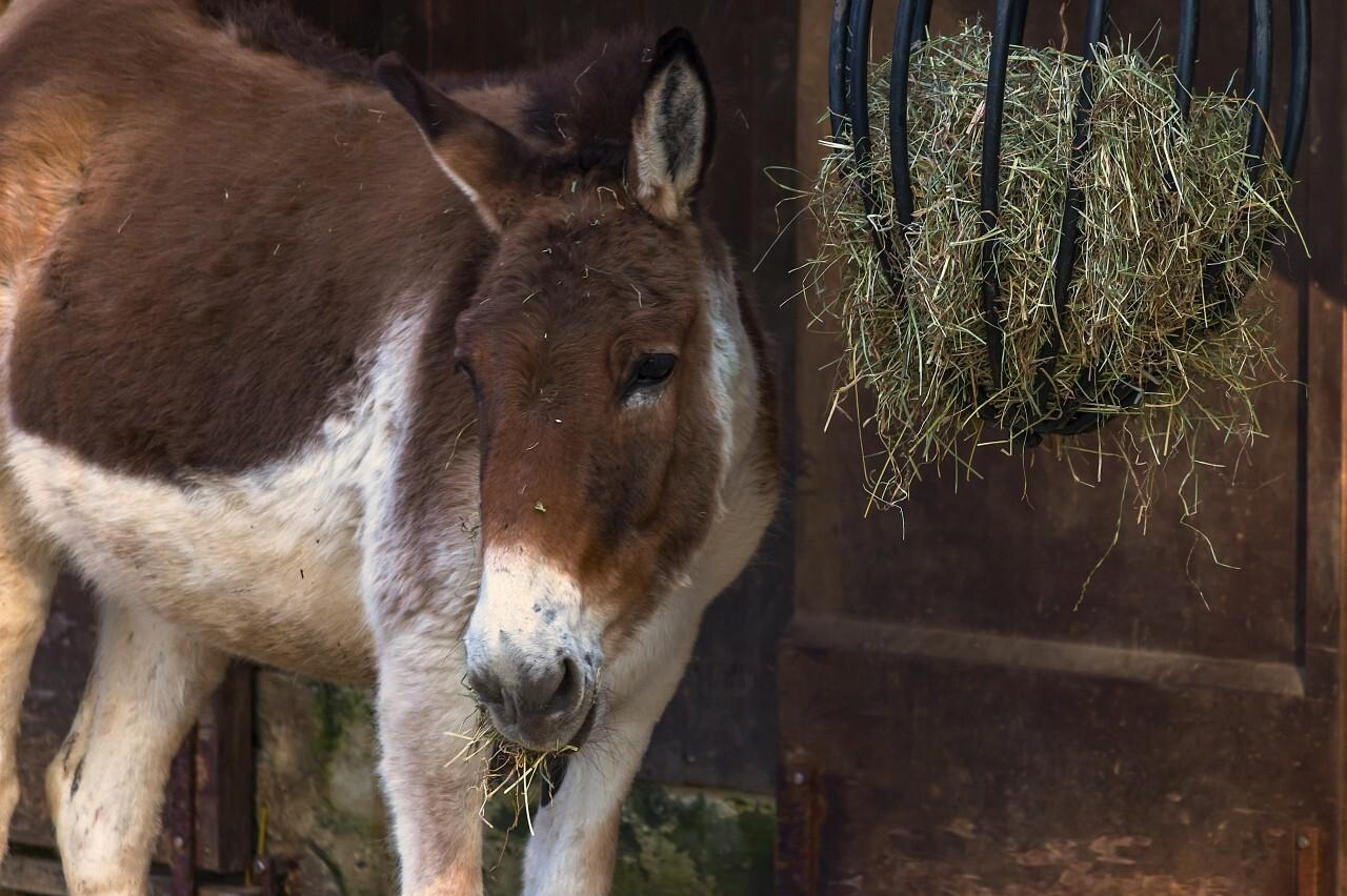 Cute donkeys fluffy head