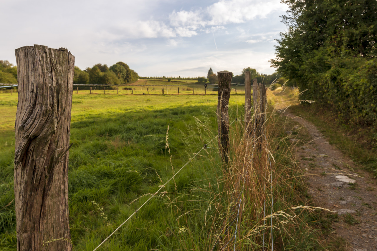 fence on the dirt road between fields