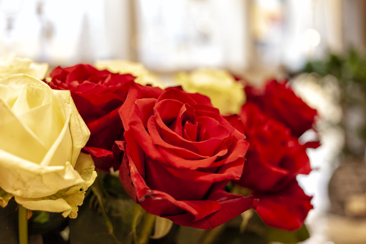 bouquet of red roses in a flower market