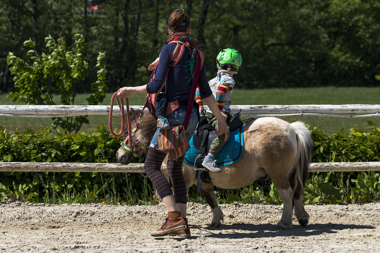 child is riding a pony