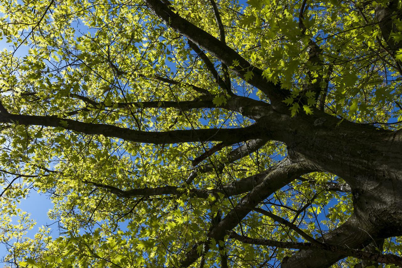 treetop under bluesky