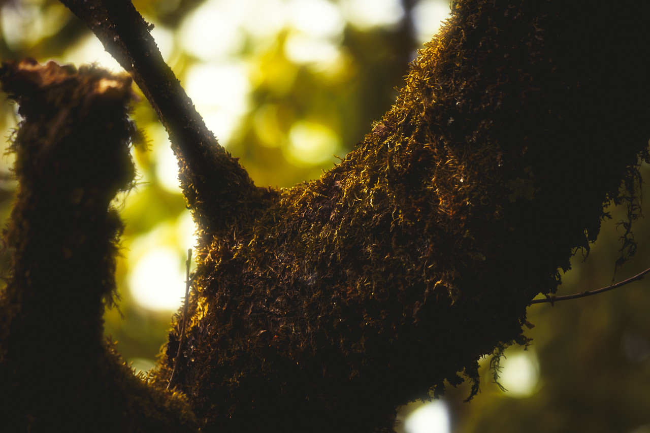 forest tree moss