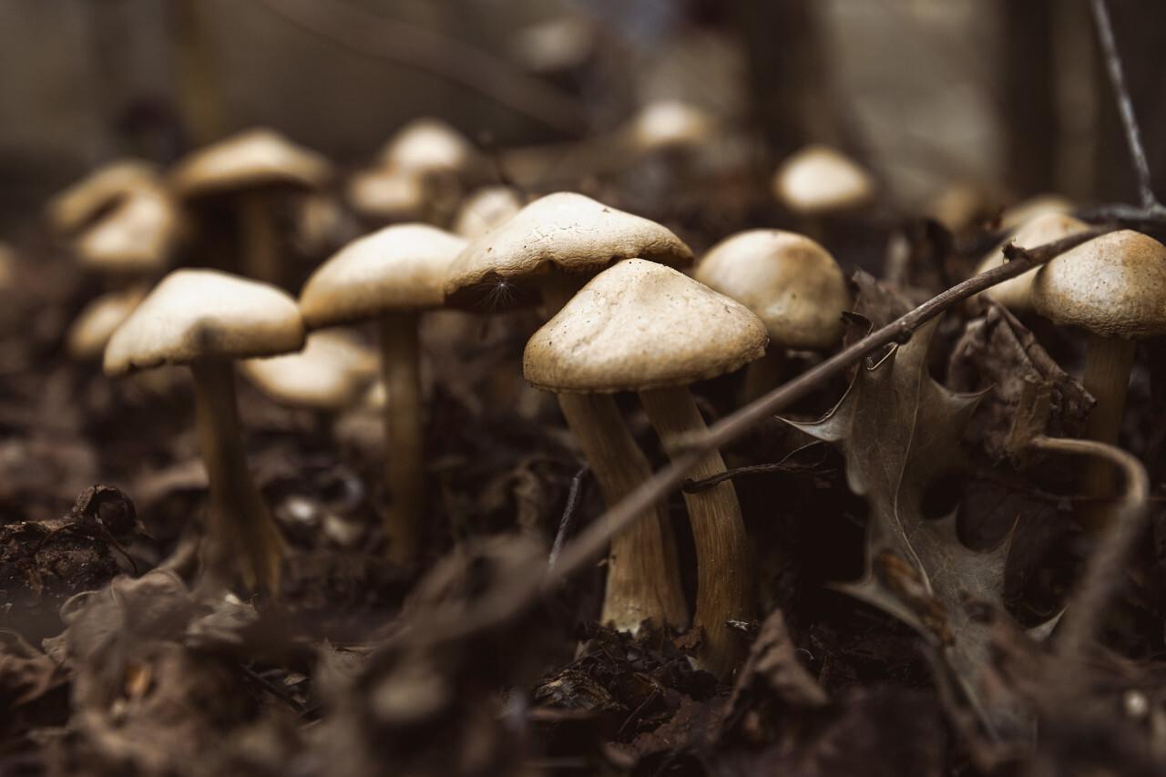 mushrooms on forestfloor