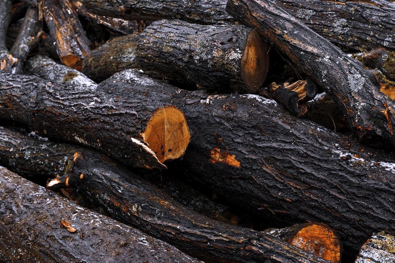 wet logs