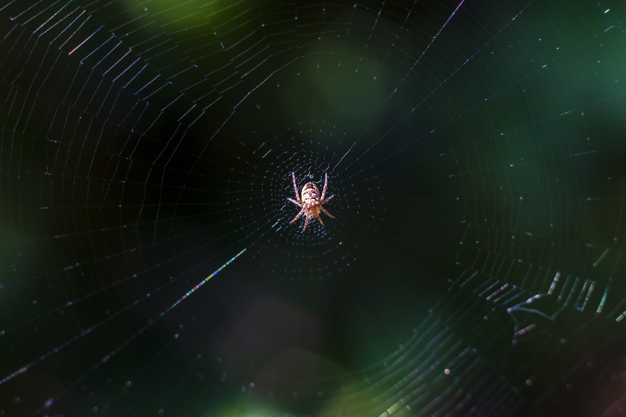 spider in her web april