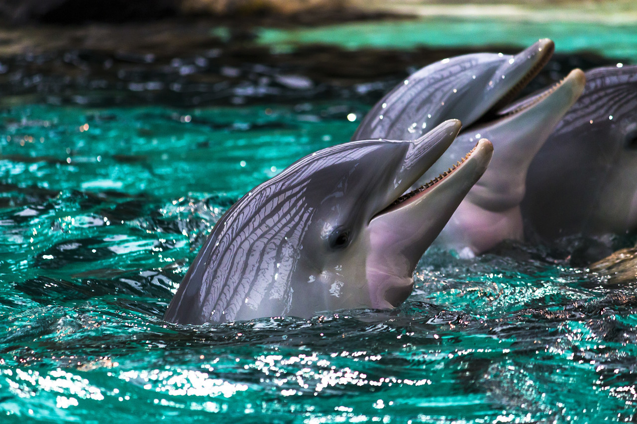 Dolphins in Water