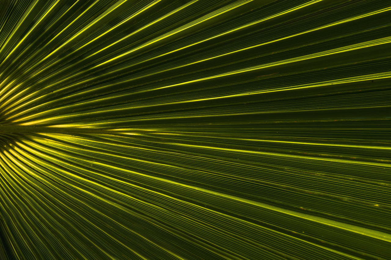 beautiful green palm leaf background