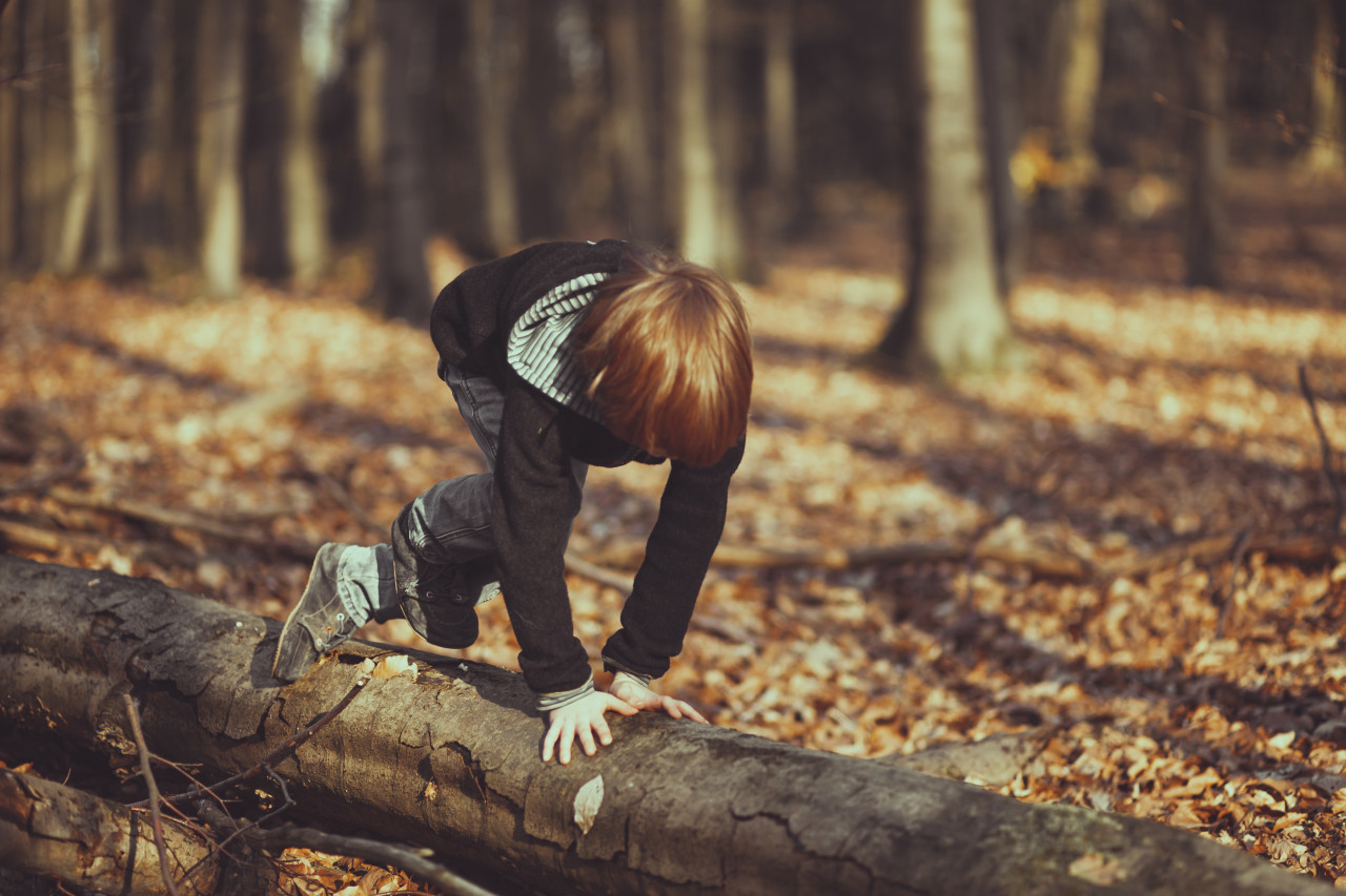 Little boy climbs a tree trunk in the forest