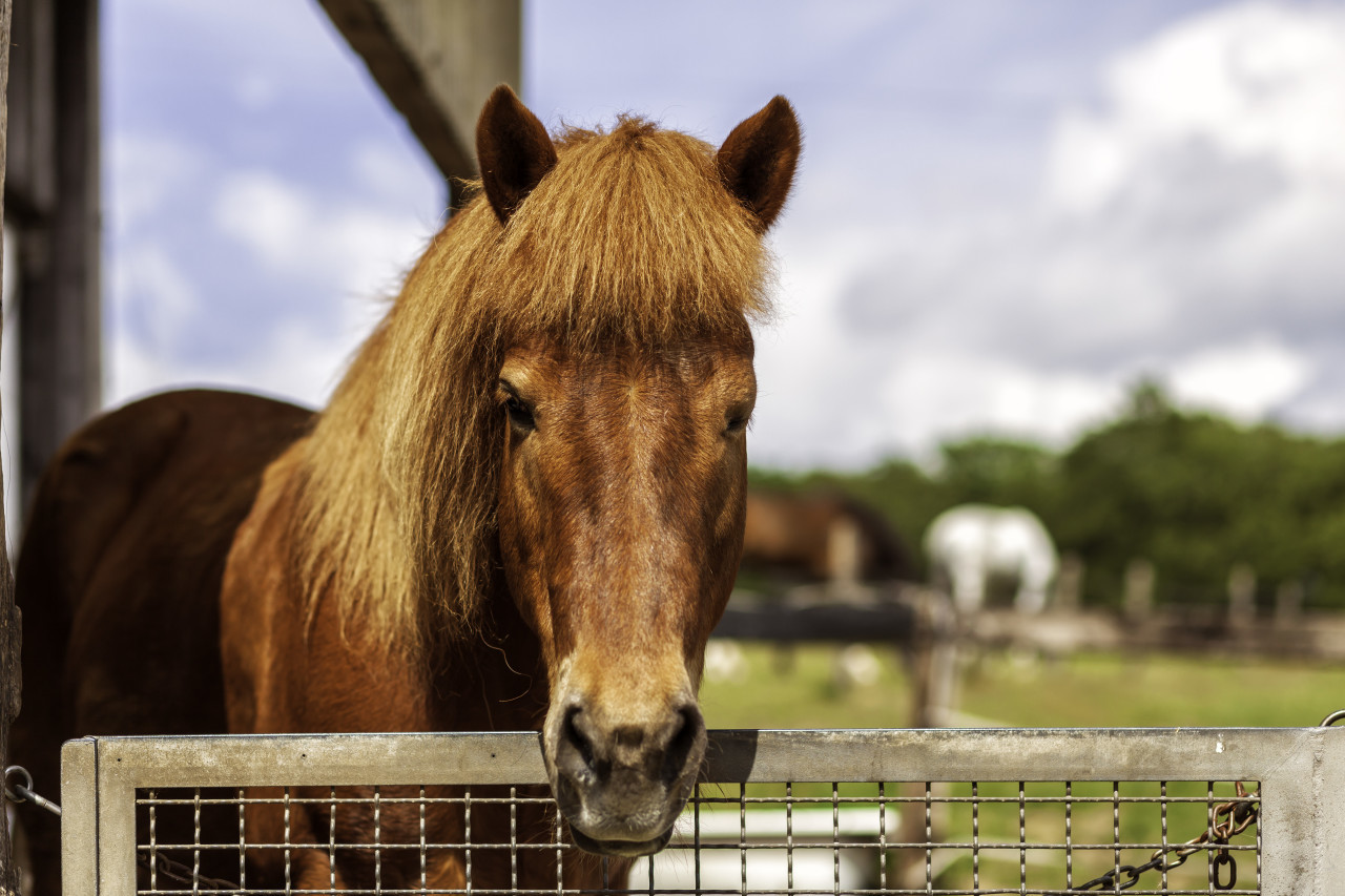 Beautiful brown horse in the paddock. Portrait of a horse
