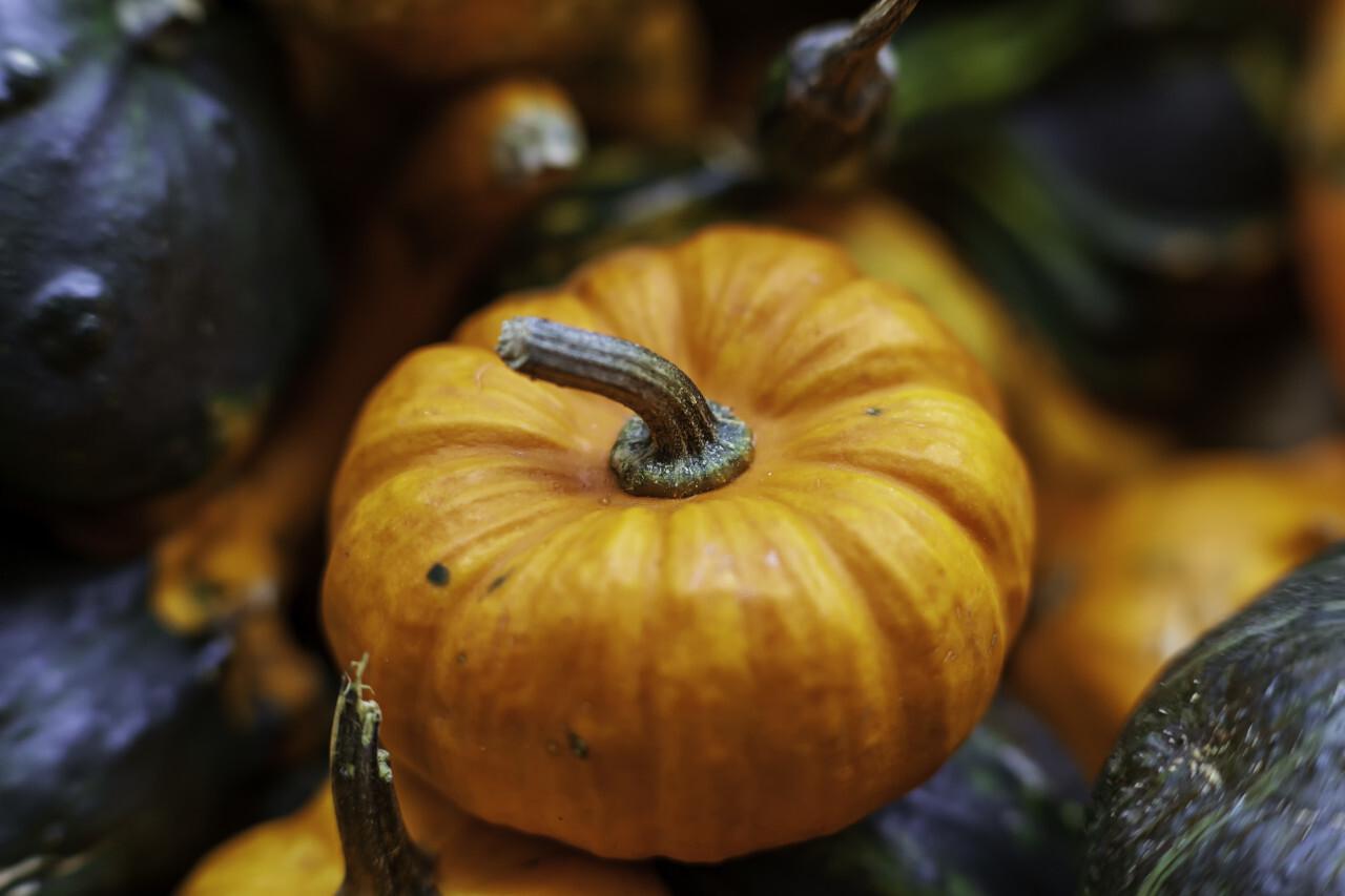 autumn orange organic Pumpkin harvest background