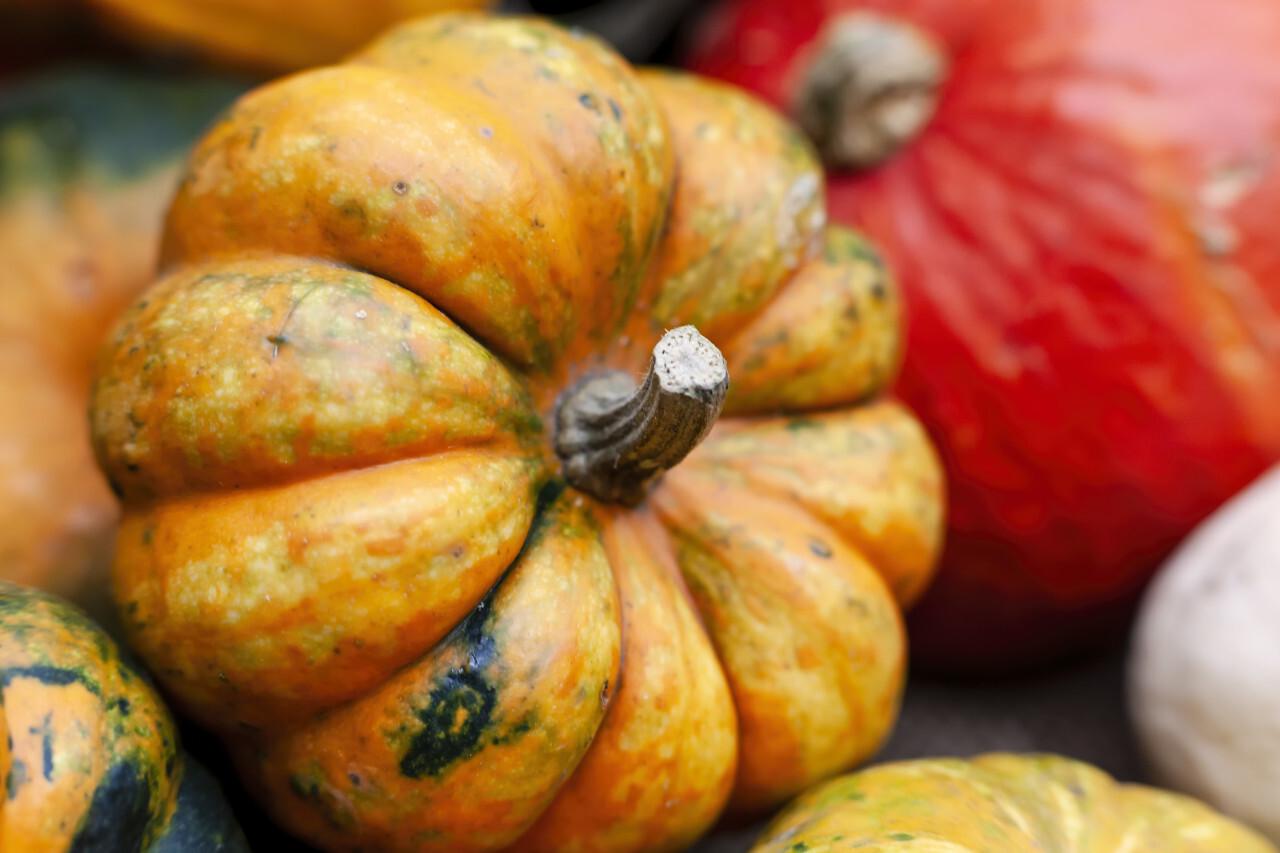 Orange Pumpkin between other Pumpkins