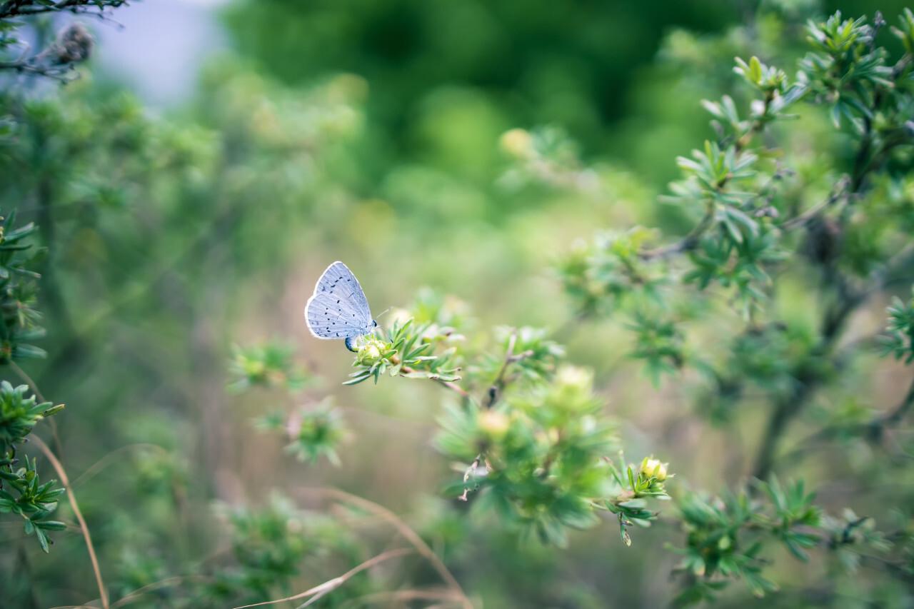 Beautiful blue butterfly on green bokeh
