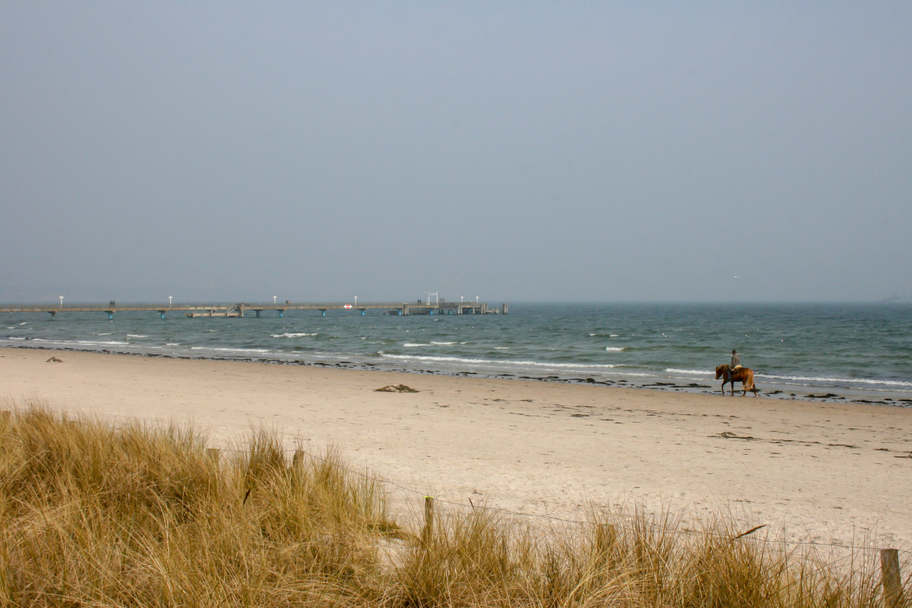 Rider rides his horse on the beach of the Baltic Sea
